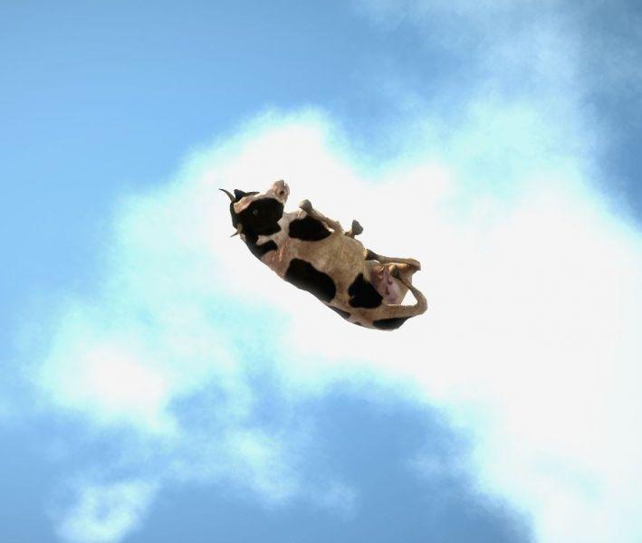 Flying Cow Bandnet Hamburg